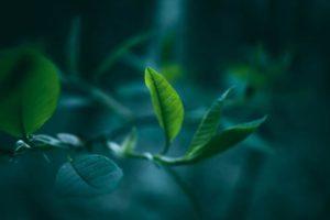 抹茶 緑茶 青汁 大麦若葉 大麦 若葉 福岡 八女 煎茶 九州産 日本 japan Green Tea mattya お茶 健康 60