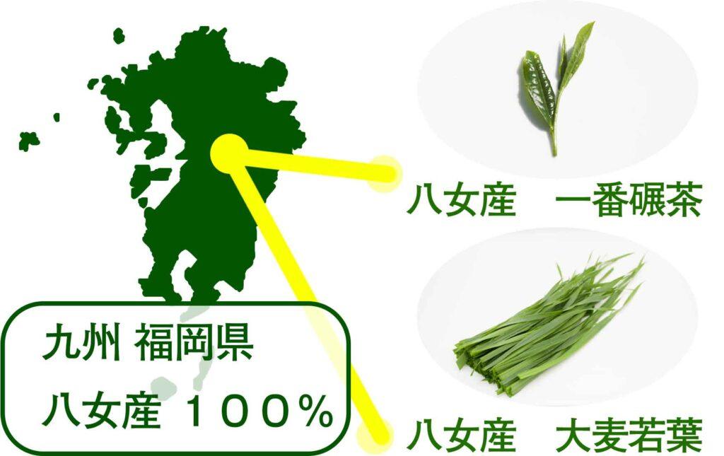 産 福岡県 八女 茶 抹茶 国産 美味しい 大麦若葉 青汁 緑茶